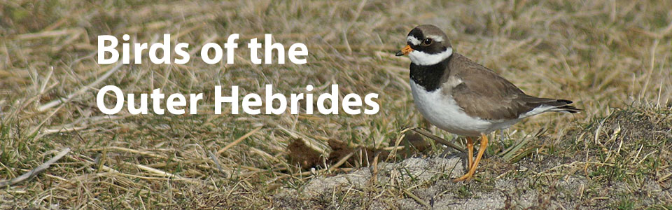 Birds of the Outer Hebrides